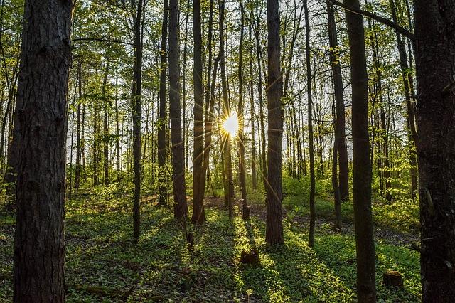 slunce za lesem